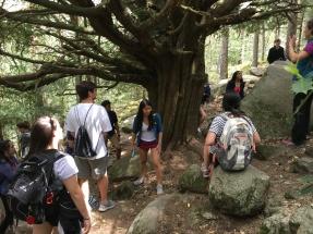 Around the yew tree