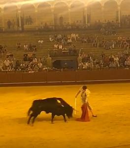 Bullfight lead image 3