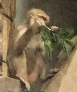 Macaque Tree